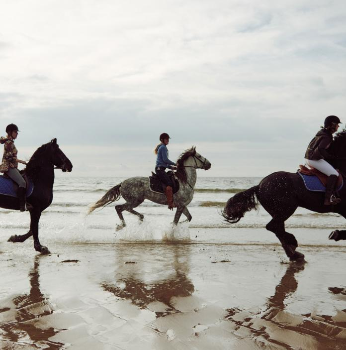 horsers galloping on beach.