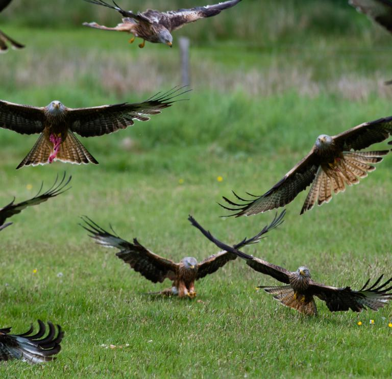Wildlife To See In Wales Visit Wales